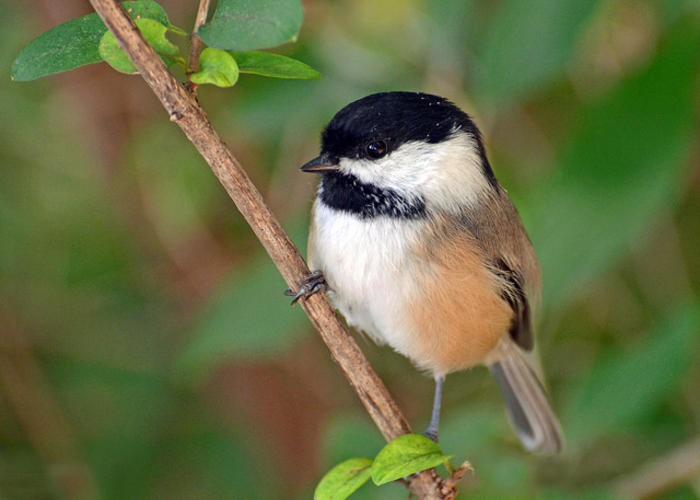 Birders break records for Great Backyard Bird Count ...