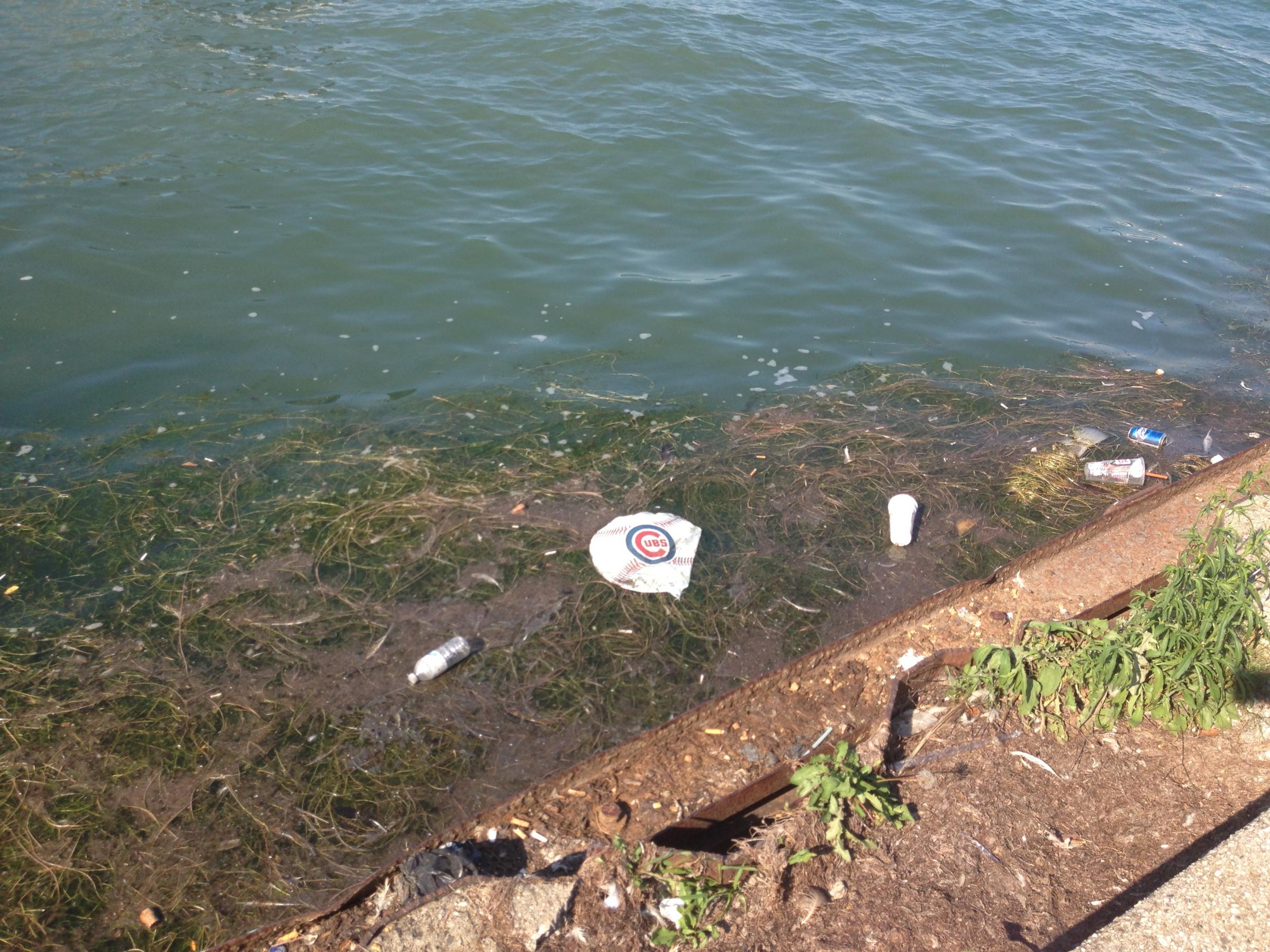 an essay on the pollution on the great lakes Imported into the southern us to serve the food fish industry as well as keeping aquaculture facilities clean from algae, fish hatcheries as well as sewers.