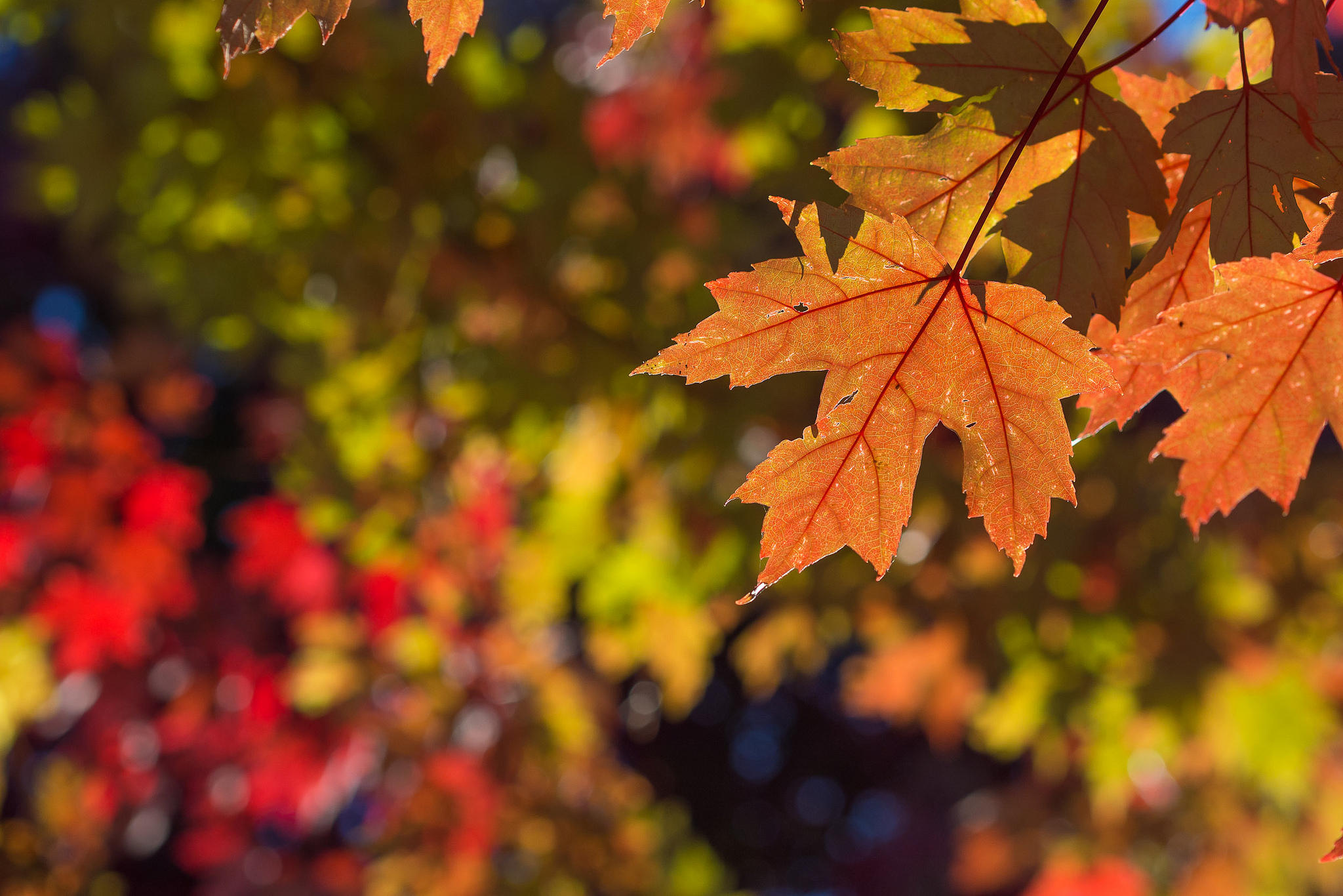 You Ll Have To Wait A Little Longer For Michigan S Fall Colors