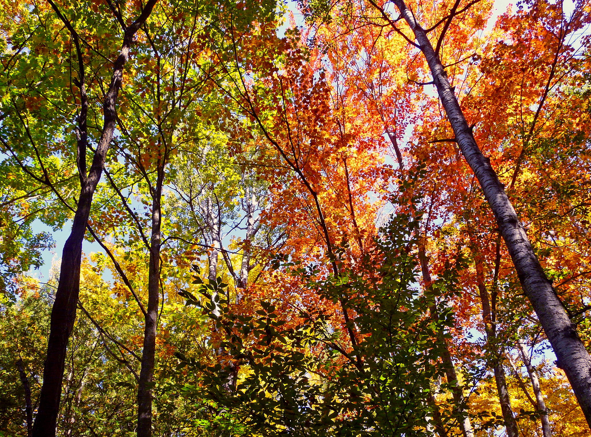 Michigan Trees Are Migrating And It S Not All Due To