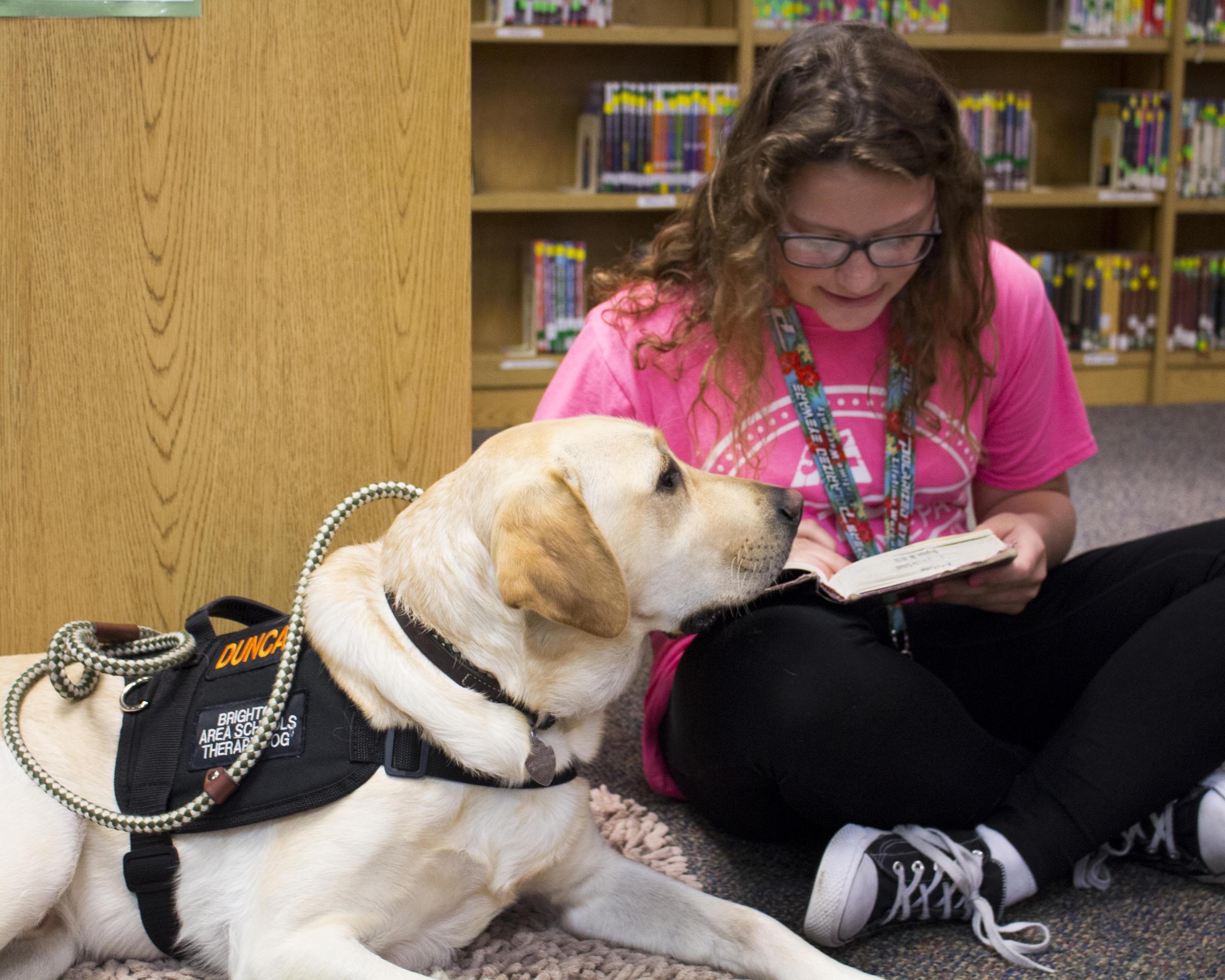 Michigan Dog Training Schools