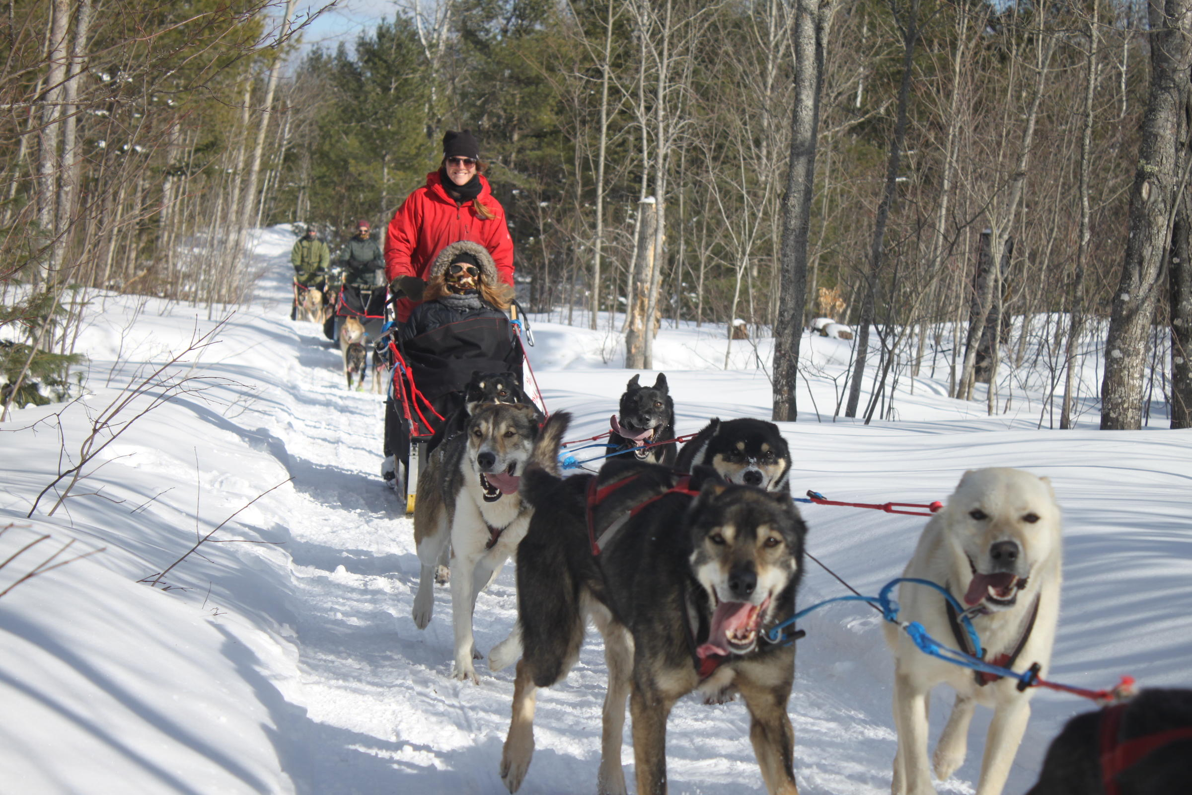 Dog sledding joins the pack of popular winter sports in ...