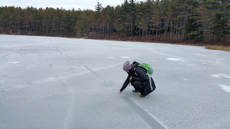 Student Xochitl Ortiz Ross observes a mark on the ice, where an otter has traveled across by sliding on its belly.