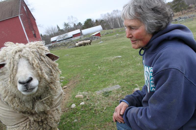 Joanne Meyers with a sheep.