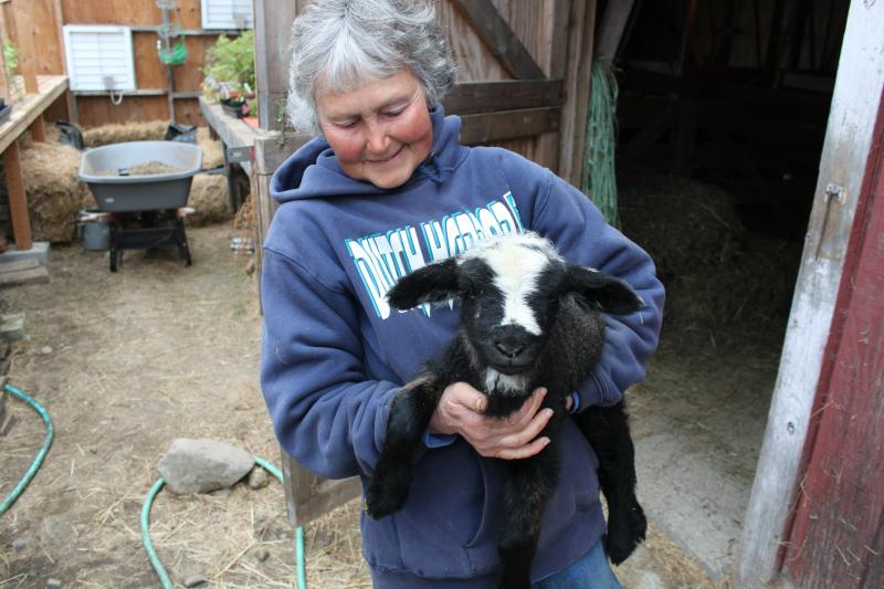 Joanne Meyers with a California Variegated Romeldale lamb.