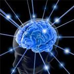 Brain Fitness & Memory Loss