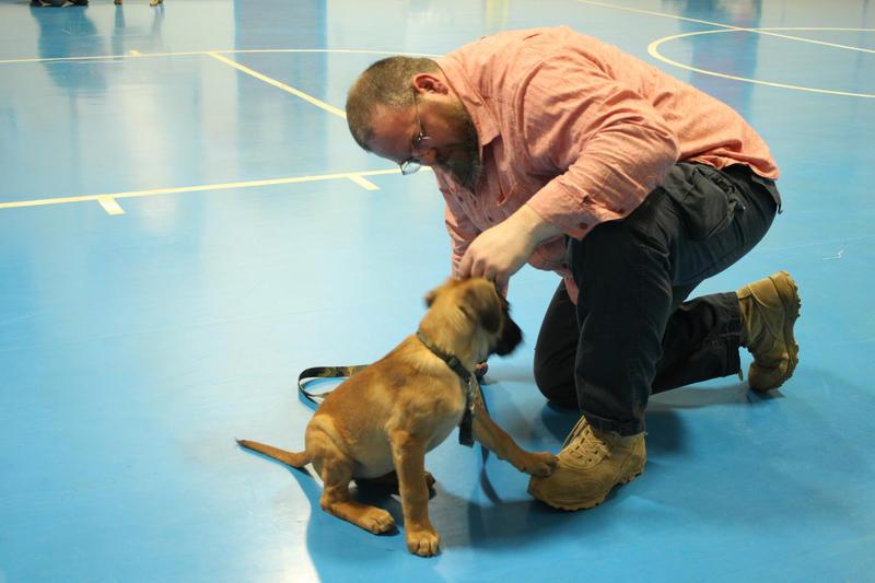 Philip St. Amand with 13-week-old bullmastiff puppy, Brandy.