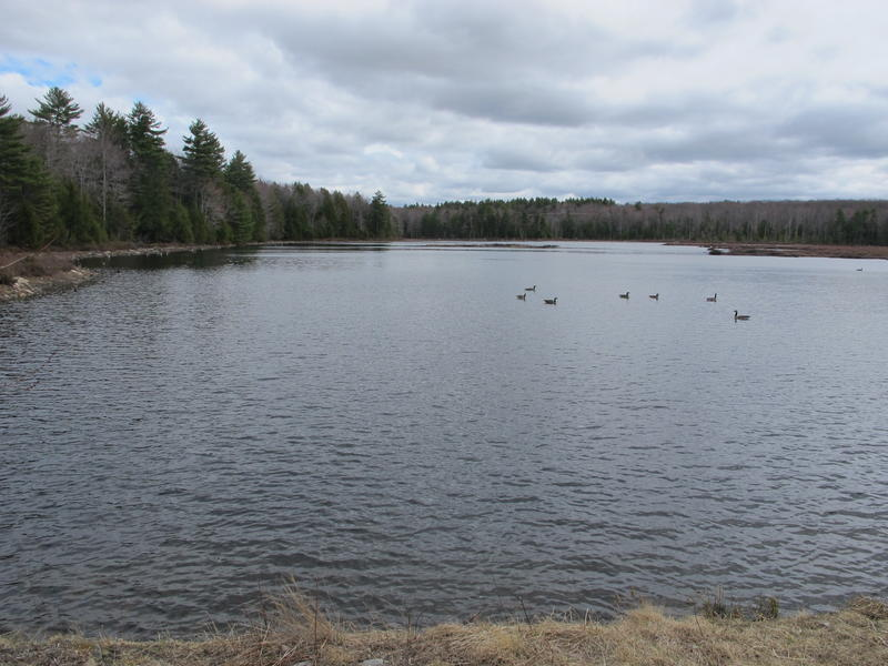 Knight's Pond in Cumberland