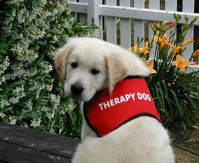 animal assisted therapy Animal-assisted therapy has commonly been known to successfully treat addiction, autism, emotional and behavioral disorders, and many other health issues how do.