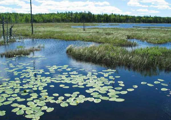 Schoodic Bog, in Hancock County, is one of dozens of conservation projects preserved with the help of Land for Maine's Future funds.
