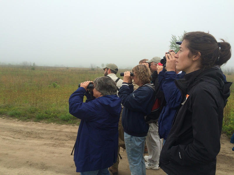 A Birds on Tap tour group watches for birds at the Kennebunk Plains, as part of Birds on Tap tours.