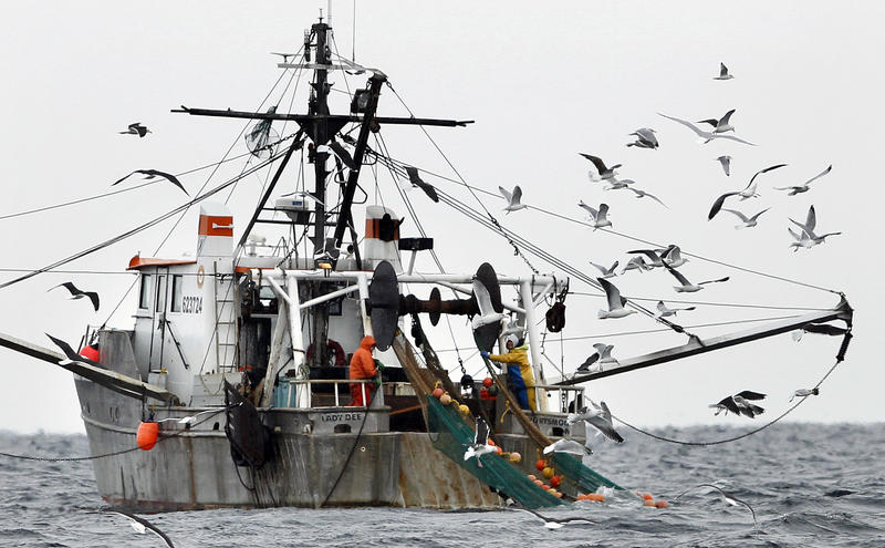 Gulls follow a shrimp fishing boat as crew members haul in their catch in the Gulf of Maine, in 2012.