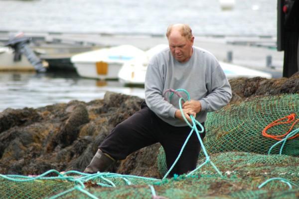 Local fisherman and seaweed harvester Hale Miller prepares to load large mesh bags full of rockweed onto trucks in Tenants Harbor in October 2016.