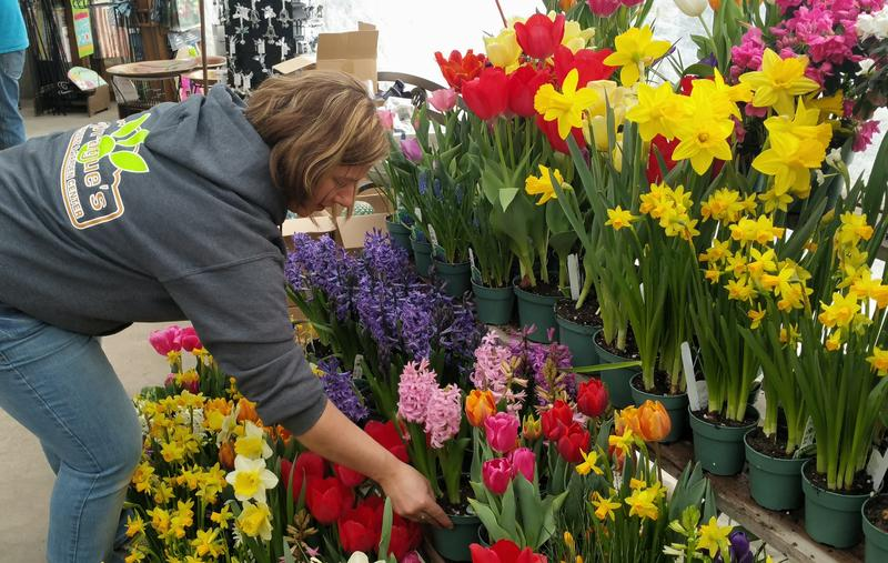 Melissa Higgins of Sprague's Nursery in Bangor