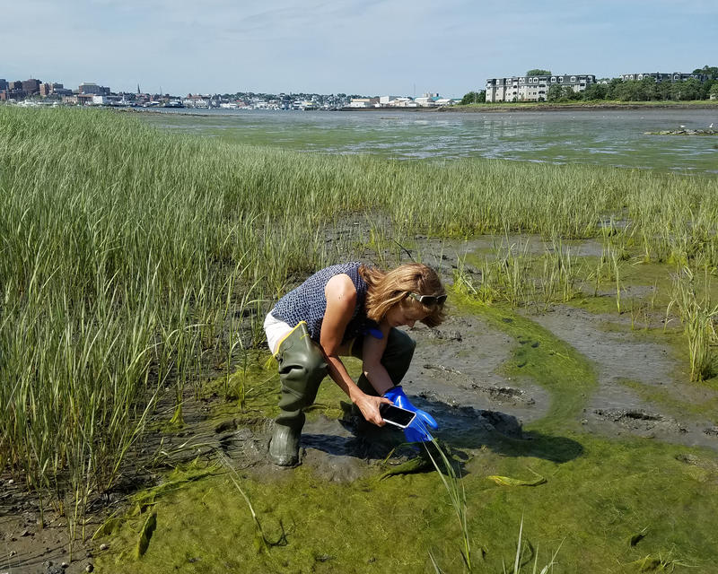 Casco Baykeeper Ivy Frignoca checks an algae bloom in Mill Cove, South Portland on Thursday.