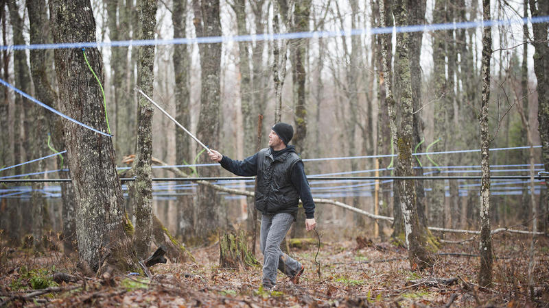 Bernard Rodrigue removes taps from maple trees at his sugar camp on Monday, May 1. He runs the camp with his father on land leased from Paul Fortin in Big Six township along the Maine-Quebec border.
