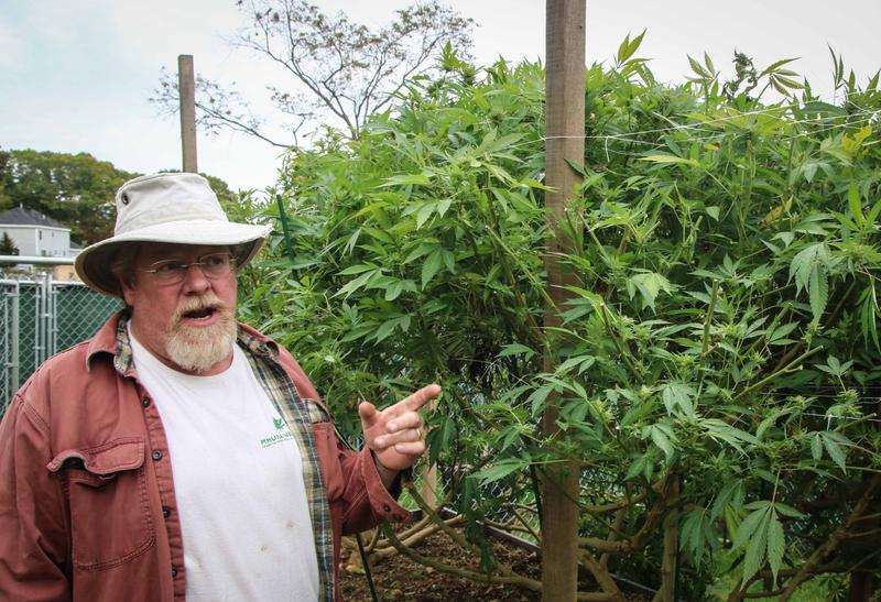 King Bishop and his medical marijuana crop at his farm in Morrill.