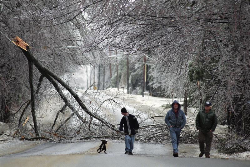 A group of neighbors walk near a large tree limb which fell onto power lines on Rt. 202 near New Gloucester, Maine, Thursday, Jan. 8, 1998.