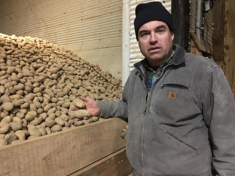Brent Buck shows off his potatoes from his farm in Mapleton. Buck uses about three or four local students every year.