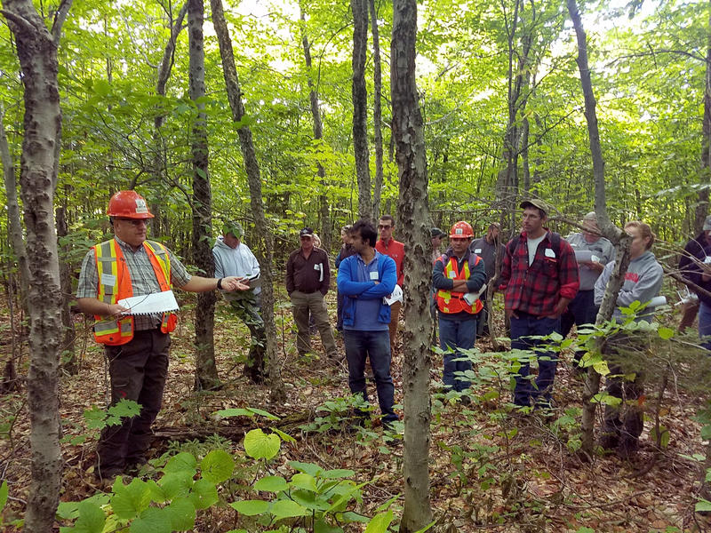 In a Sept. 15, 2016 photo provided by the University of Maine, Gaetan Pelletier of the Northern Hardwoods Research Institute describes diseased beech problem to members of the University of Maine Cooperative Forestry Research Unit.