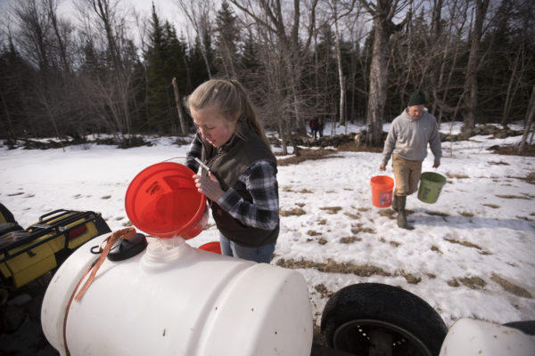 Katie Simmons dumps sap into a container as she and her family were collecting sap at Simmons & Daughters Sugar House in Morrill on Wednesday.