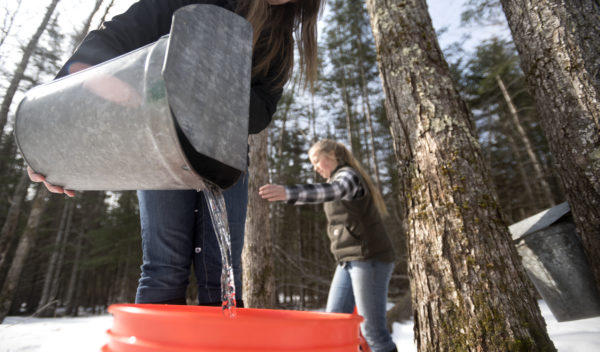 Ellie Simmons, left, and her sister Katie Simmons collect sap at Simmons & Daughters Sugar House in Morrill Wednesday.