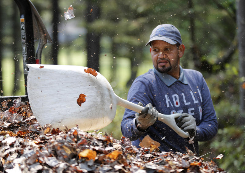 In this May 25, 2018, photo, Angel Gonzalez shovels leaves into a trailer at Sebasco Harbor Resort in Phippsburg, Maine. Gonzalez is one of several Puerto Rican workers hired by resort to do landscaping, housekeeping and kitchen work.