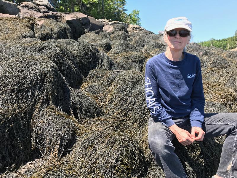 Robin Hadlock Seeley, of Lubec, with some of the rockweed that covers Cobscook Bay in Washington County