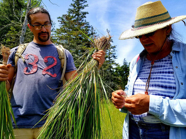 Gabriel and Gal Frey collecting sweetgrass