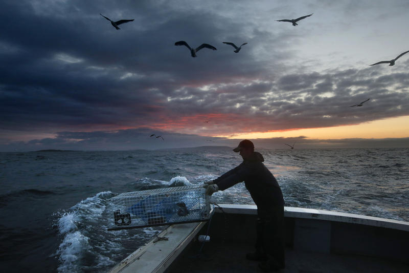 In this July 29, 2014 file photo, Brandon Demmons sends a lobster trap overboard at dawn off of Monhegan Island, Maine.