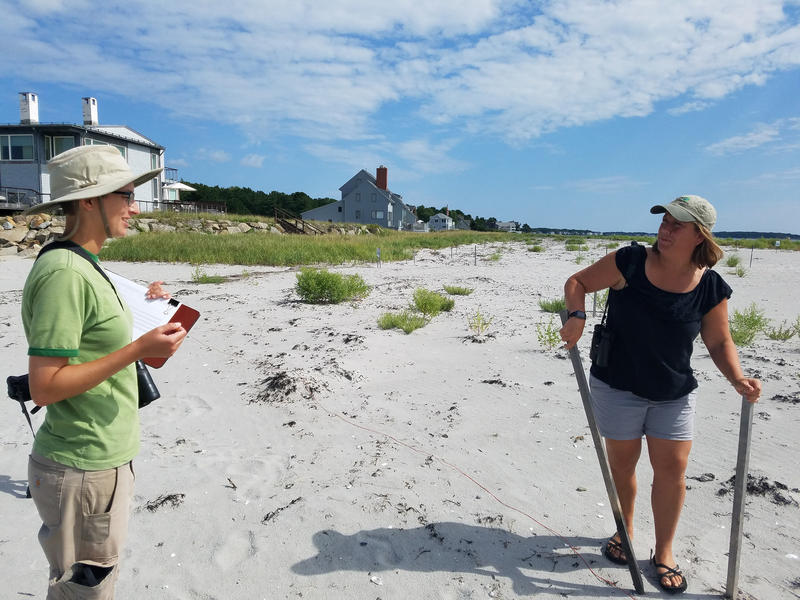 Laura Minich Zitske (right) removes stakes and twine marking off piping plover nesting areas on Goose Rocks Beach in Kennebunkport.