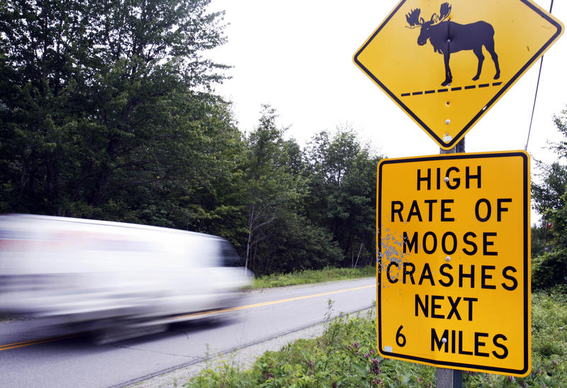 In this July 2009 photo, a road sign warns motorists to be aware of moose in the area, near North New Portland, Maine.