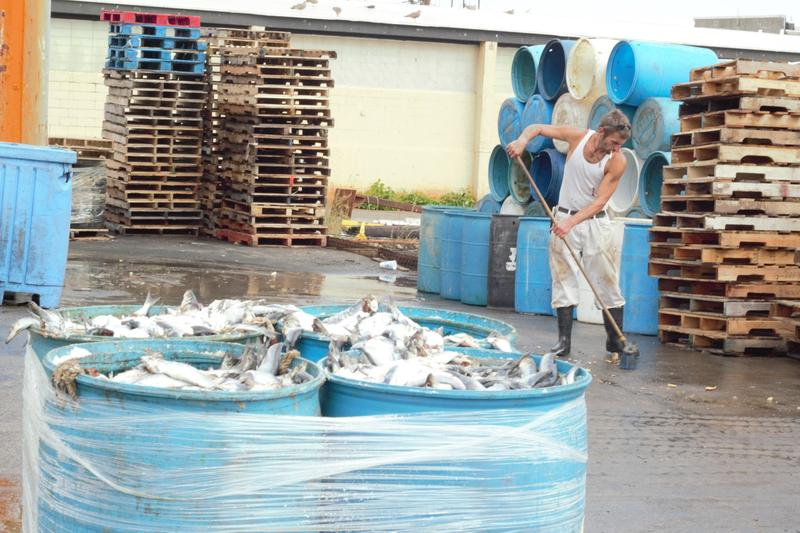 At the New England Fish Company on Portland's waterfront, Ryan Raber and his sister, Susanna, say they will likely have to lay off some crew and staff to keep their second generation bait business going.