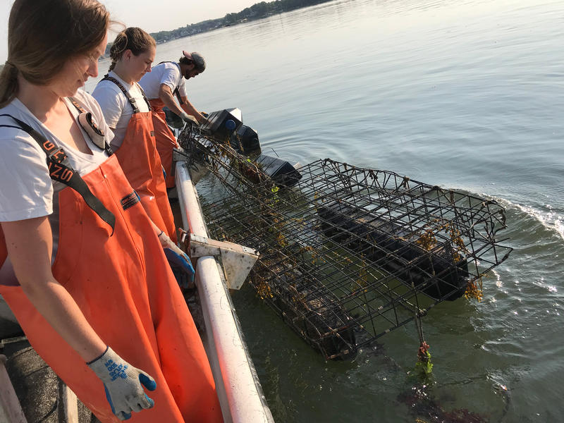 Halley McVeigh (from left), Emilee Ennis, and Jeff Augur on the Mook Sea Farm's oyster growers.