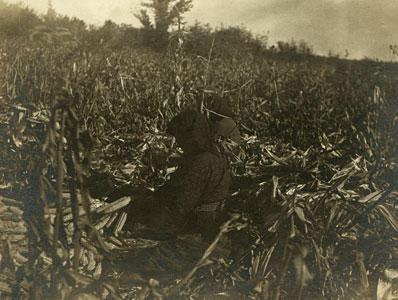Corn husking in a Mandan garden.