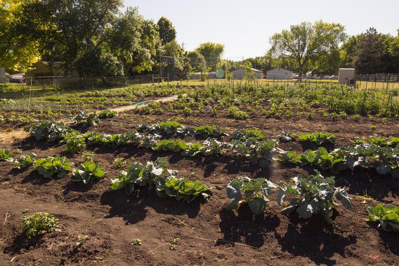 Another shot of a Fargo community garden