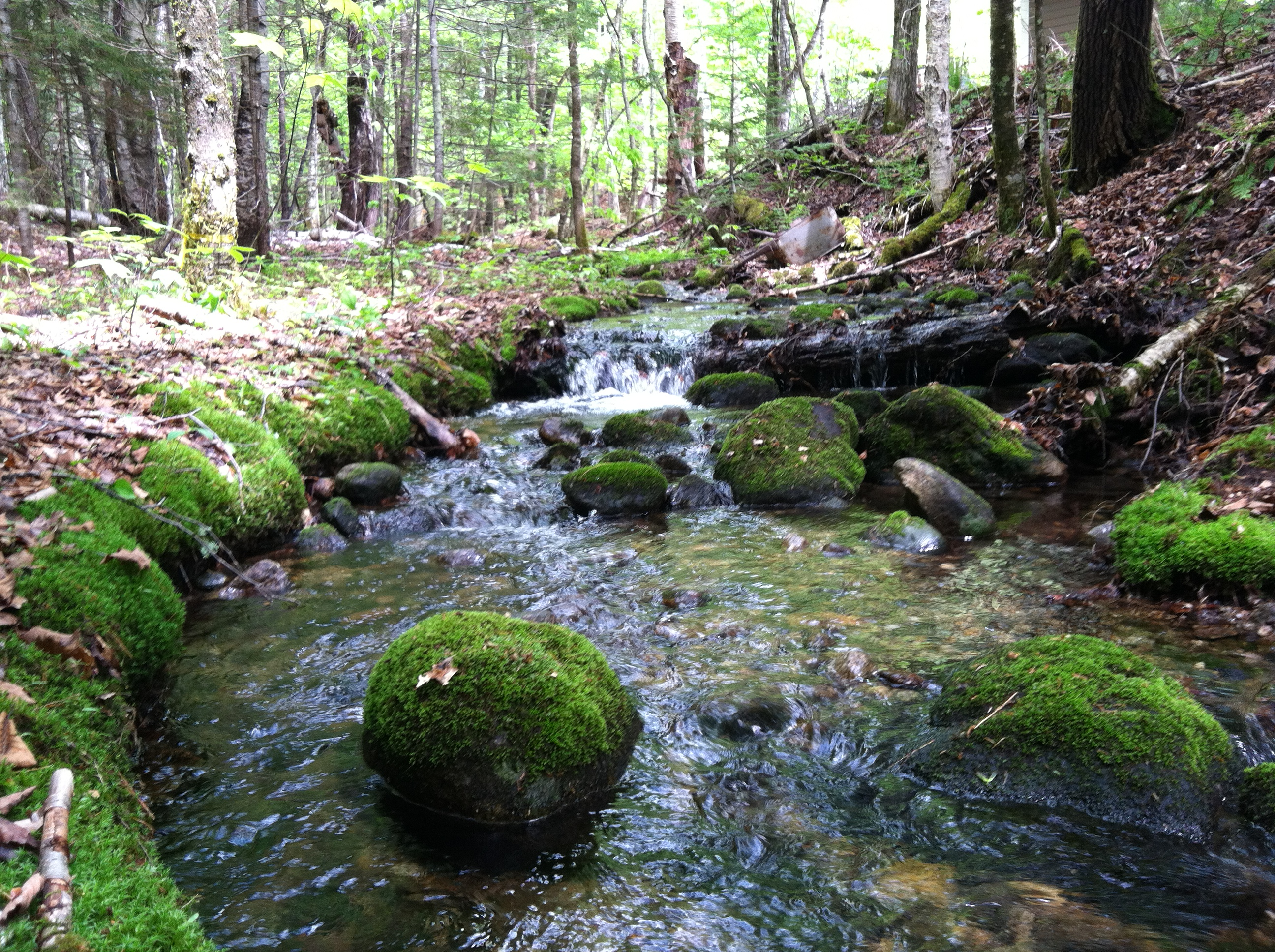 acid rain case analysis harvard Co-benefits of carbon standards for ecosystems, these co-pollutants contribute to acid rain the over-fertilization of many types of ecosystems, including grasslands, forests this study, led by syracuse and harvard universities.