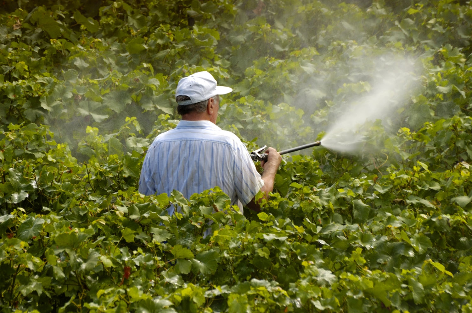 Pesticide drift new hampshire public radio for Garden pesticides
