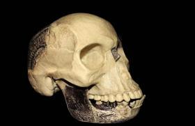 Replica of the Piltdown skull