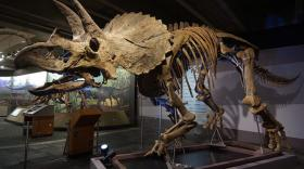 Cliff the Triceratops wants YOU to learn about dinosaurs!