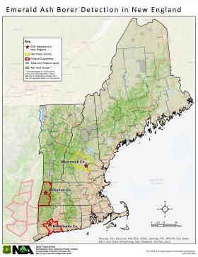 Ash borer has popped up in a  few spots in New England, spreading east from Michigan. Ash trees in New Hampshire are found most heavily along the path of the Appalachian Mountains.