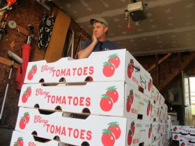 Buley looks over boxes of tomatoes.