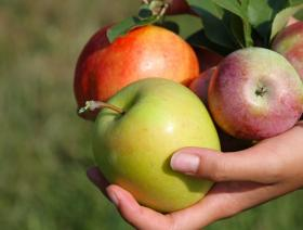Pick-your-own is increasingly where the money is for New Hampshire orchards
