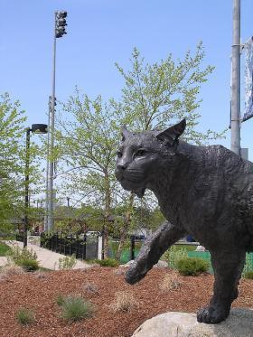 Bronze Wildcat