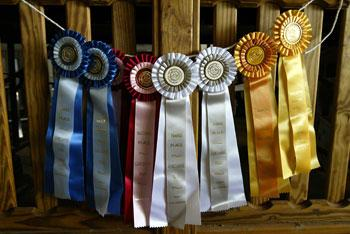 A rainbow of ribbons are waiting to be passed out.