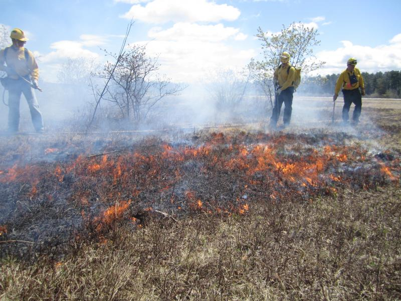 Firefighter cadets with spray packs ensure that a small prescribed burn at the Concord airport doesn't get out of hand.
