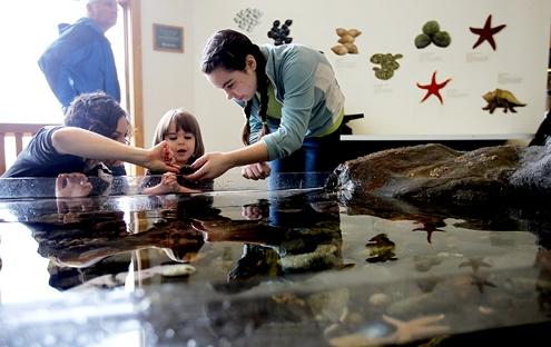 Myra (right) shows a young visitor the wonders of the Touch Tank. (Cheryl Senter, NHPR)