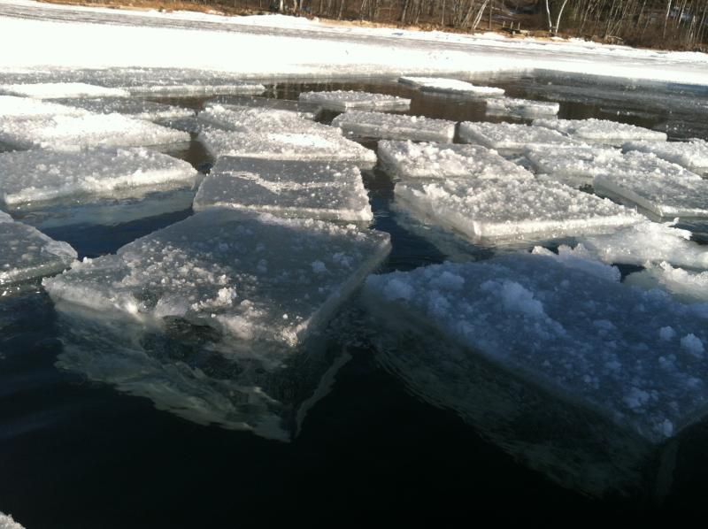 The cakes float freely in the ice field, before being funnelled into a channel leading to the truck.