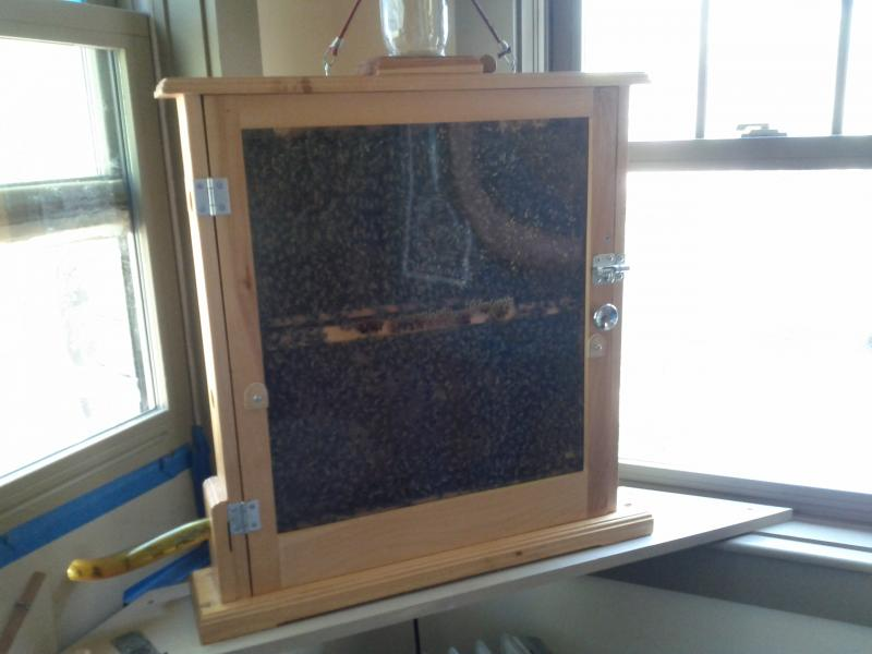 Booth's observation hive in her bedroom.