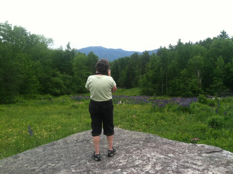 Renette Bedard of Woodstock, Vt. snaps a photo at the Fields of Lupine Festival.